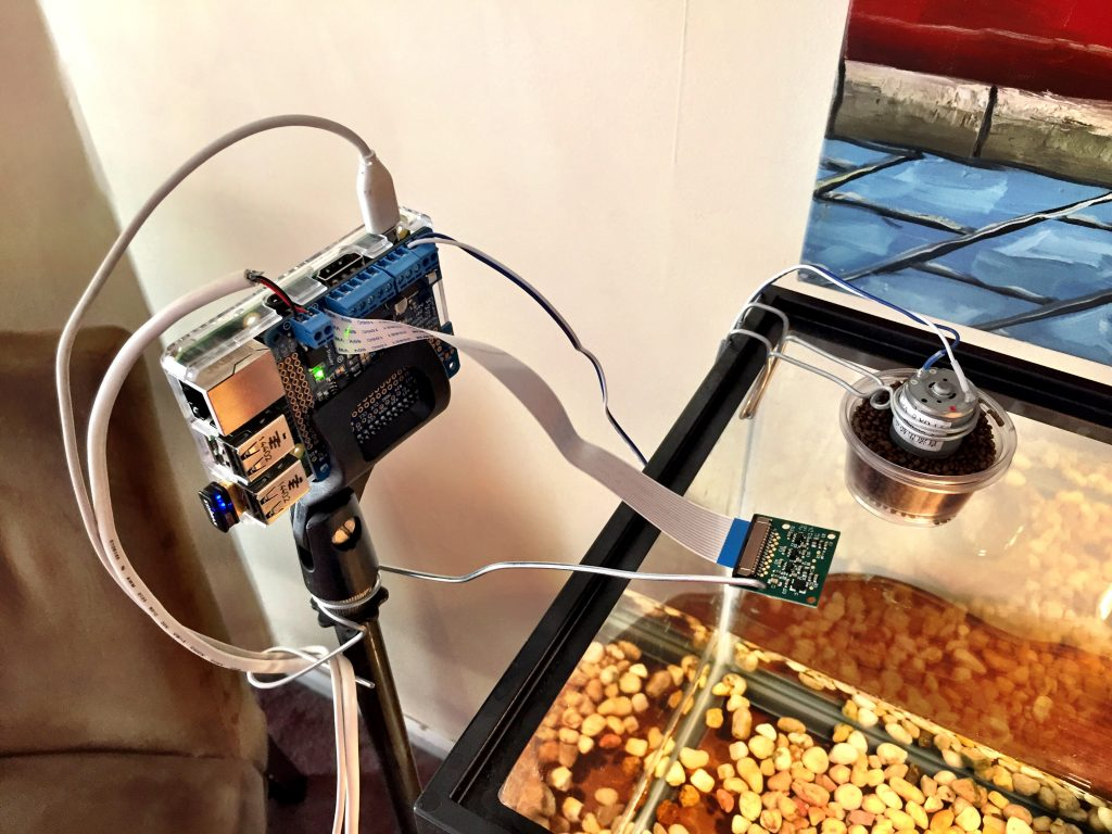 Raspberry Pi turtle feeder